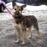 Щенок девочка 6 месяцев, Новосибирск