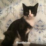 Котенок Матвейка 3,5 месяца, Новосибирск