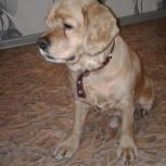 Помогите найти собаку, Новосибирск