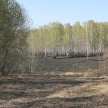 Ищу партнёра растениеводство, Новосибирск