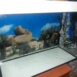 Новые аквариумы, Новосибирск