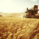 Привлекаем инвестиции, оптовая торговля зерном, экспорт. Урожай 2018., Новосибирск