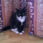 Отдам кошечку в добрые и заботливые руки, Новосибирск