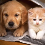 Зоопсихолог собак/кошек (бихейвиерист), Новосибирск