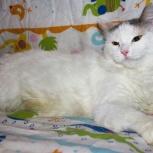 Кошечка Мася в поисках своего хозяина, Новосибирск