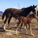 Лошадь и жеребёнок, Новосибирск