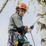 Спил деревьев в новосибирске и нсо, Новосибирск