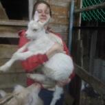 Козлята 3-месячные, Новосибирск