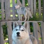 Передержка для вашей собаки, Новосибирск