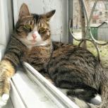Потерялся кот!, Новосибирск