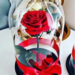 Роза в Колбе красная, Новосибирск