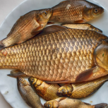 Рыба речная, Новосибирск