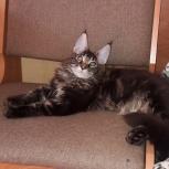 Любовь с первого взгляда, котик, Новосибирск