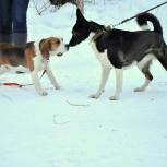 собачка(подросток) нуждается в семье., Новосибирск