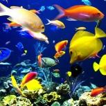 Примем в дар аквариумные рыбки и растения, Новосибирск