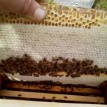 пчелосемьи пакеты, Новосибирск