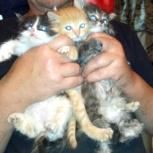 Котятки в самые добрые руки!, Новосибирск