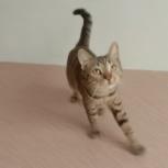 Молодой котик ищет любящую семью, Новосибирск