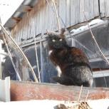 Котёнок -подросток, Новосибирск