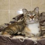 Кошка Нюша, Новосибирск