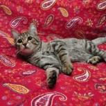 Чудесный котик ищет дом, Новосибирск