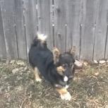 Потерялась маленькая собачка, Новосибирск