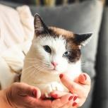 Кот Одуванчик до года, Новосибирск