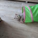 Кошка Алиса, Новосибирск