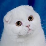 Котик ищет кошечку, Новосибирск