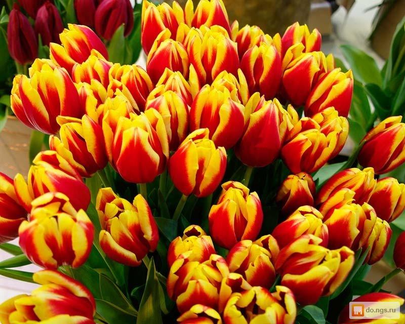 Купить тюльпаны по оптовой цене в красноярске доставка цветов г.макеевка донецкой обл