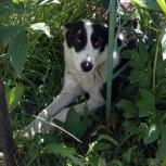 Собака Найда ищет хозяина. Отдадим в хорошие руки, Новосибирск