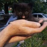 Котёнка Тошку в добрые руки отдам, Новосибирск