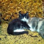 Котик 3,5 месяца в хорошие руки, Новосибирск