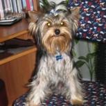 Потерялся пёс, Новосибирск
