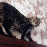 Пропала кошка!, Новосибирск