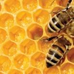 Мед натуральный и продукты пчеловодства, Новосибирск