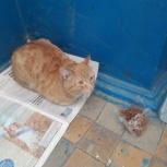 Рыжий Кот в подъезде на Титова, Новосибирск