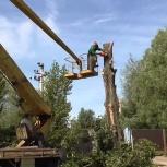 Снос-обрезка аварийных деревьев, Новосибирск