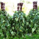 Продам веники березовые, Новосибирск
