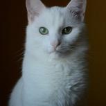 Котенок 8 месяцев, Новосибирск