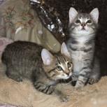 Почти коты ищут место службы, Новосибирск