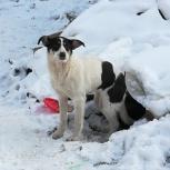 Помогите пристроить щенка!!, Новосибирск