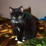 Найден кот в подъезде на улице Чапаева, Новосибирск