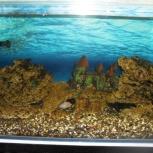 Действующий аквариум, Новосибирск