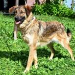 Умная и красивая собака Шанель, Новосибирск