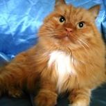 Инжир-кот для души 1 год, Новосибирск
