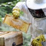 Помощник пчеловода, Новосибирск