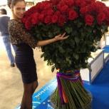 Гигантские розы 2м, Новосибирск