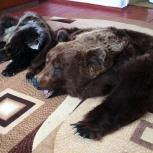 Выделаем шкуры медведя Выделка меха /Новосибирск/, Новосибирск