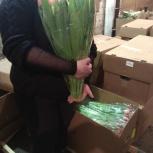 Тюльпаны оптом, Новосибирск